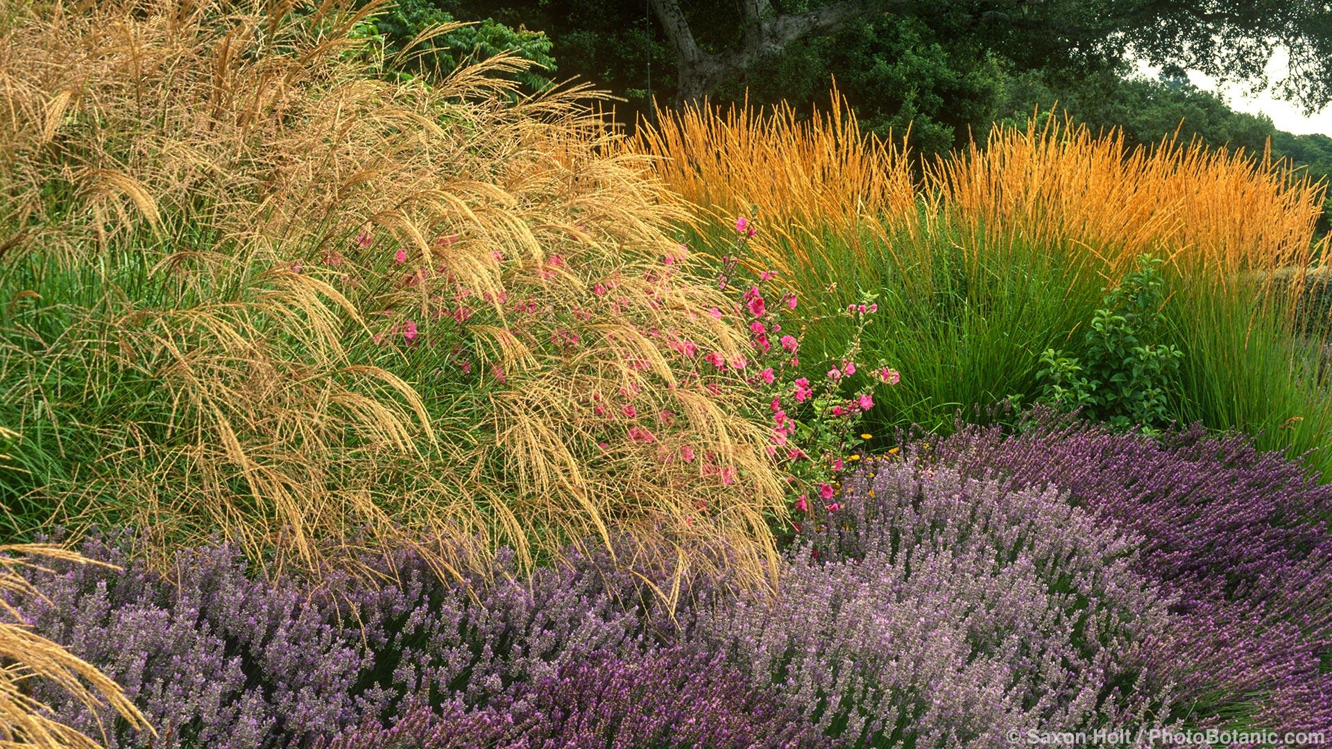 summer-dry grasses