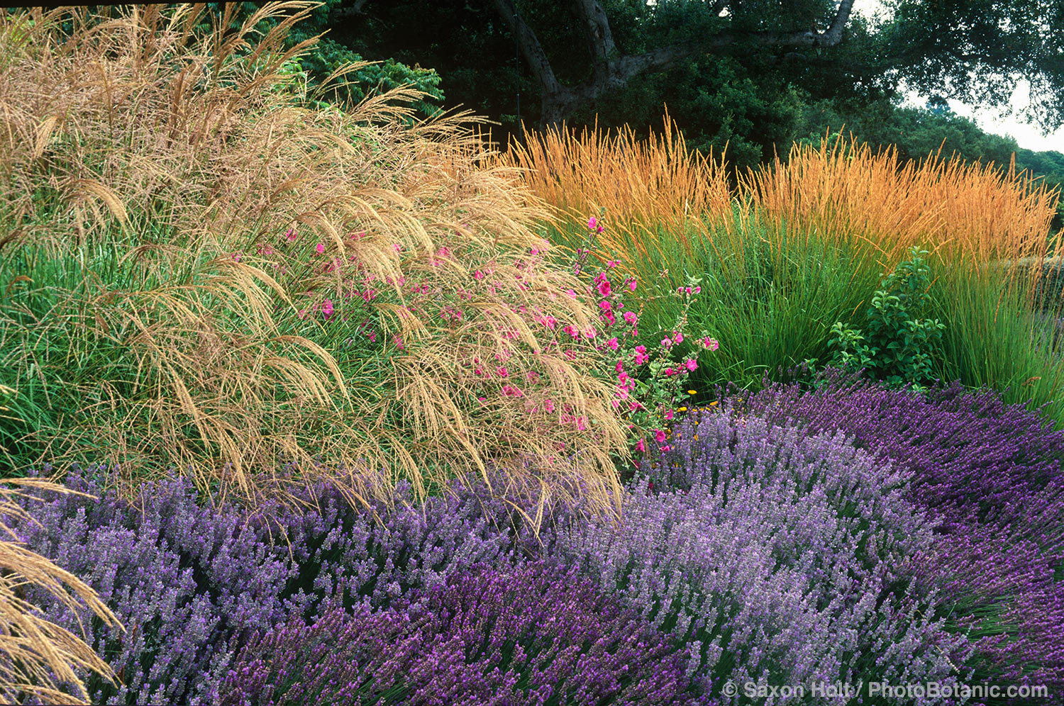The summer dry garden summer dry celebrate plants in - Garden design using grasses ...