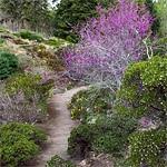Summer-dry garden in East Bay Hills.