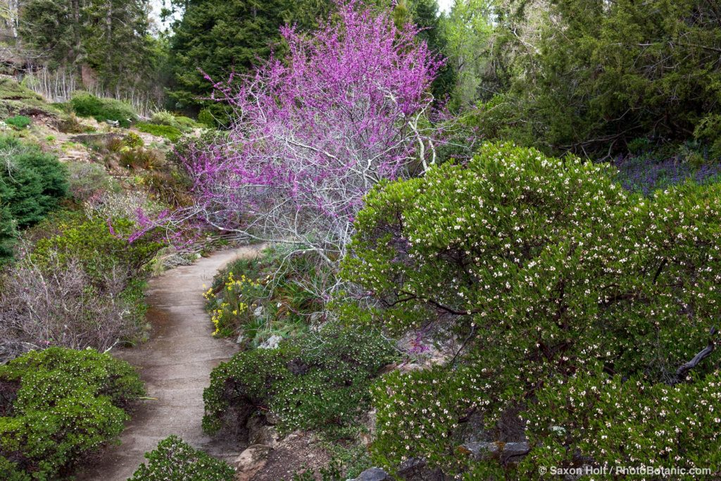 Summer-Dry garden in East Bay Hills with California native plants