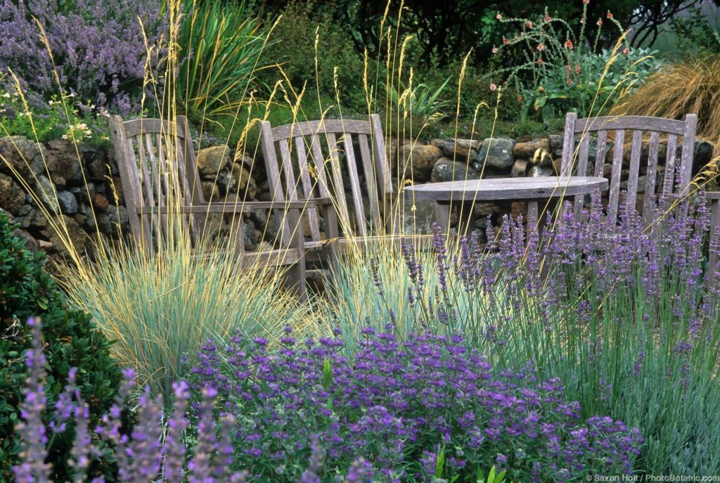 Helictotrichon sempervirens (Blue Oat Grass) sitting area by stone retaining wall in California garden with Lavender, and Caryopteris.