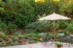 Myrica californica as a tall privacy hedge